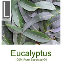 EUCALYPTUS 10 ML PURE ESSENTIAL OIL AROMATHERAPY GRADE