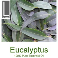 EUCALYPTUS 50 ML PURE ESSENTIAL OIL AROMATHERAPY GRADE